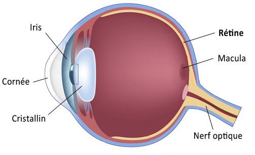 Rétine et les yeux rouges